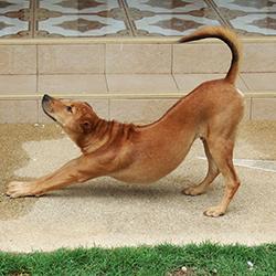 dog rescue services nongprue