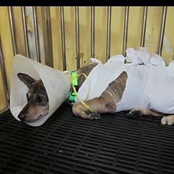 dog rescue services sterilization