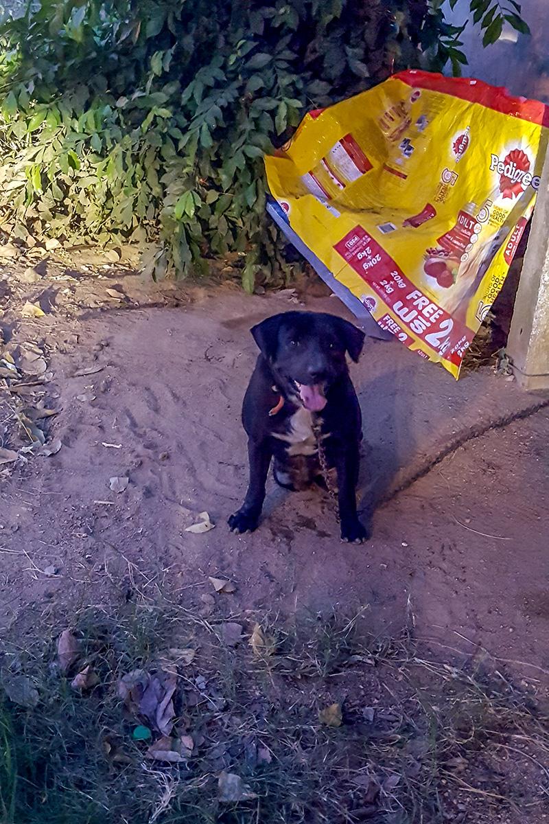 handicapped dog rescued